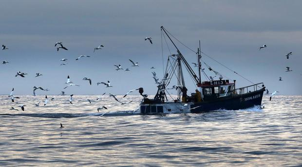 Fish are learning to evade trawlers, it has been revealed