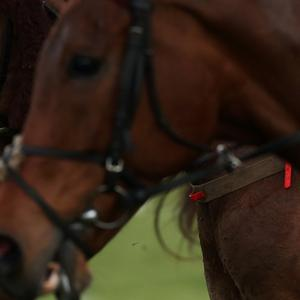 Horses' complex facial movements are similar to those in humans, the study found