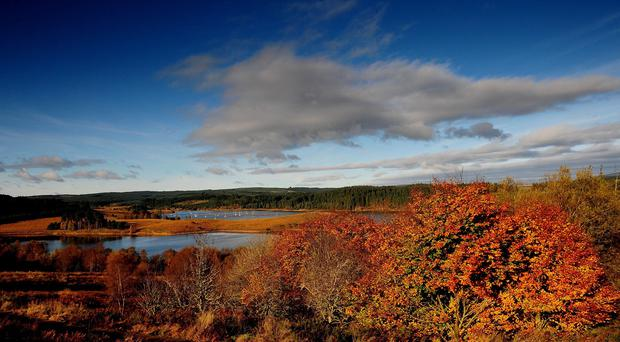 The wet, mild summer could lead to a spectacular autumnal display