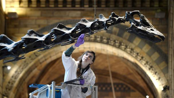 A conservator inspects Dippy the diplodocus at the Natural History Museum in London, as preparations begin for a nationwide tour in 2018