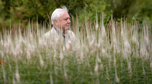 Sir David Attenborough was one of the signatories of the letter