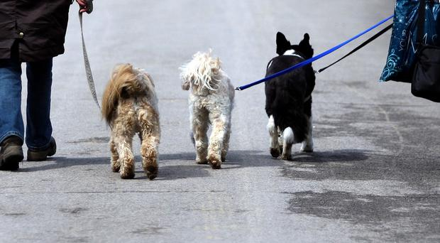 Dog owners who fail to pay the £100 fine could face a penalty of up to £1,000 if the case is taken to court