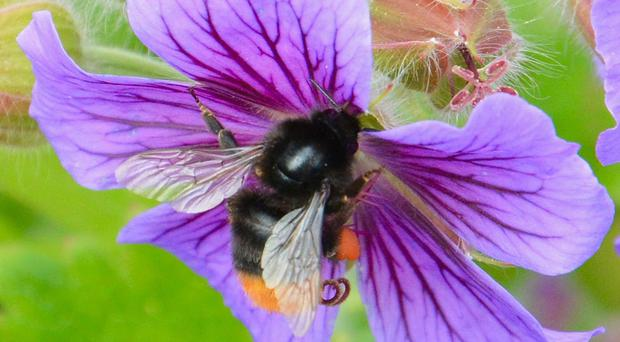 Bees use flower odours to source food
