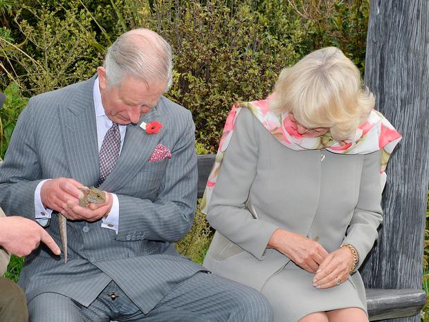 Prince Charles, and the Duchess of Cornwall, laugh after a bumble bee takes a liking to him during their visit to the Orokonui Ecosanctuary in Dunedin, New Zealand