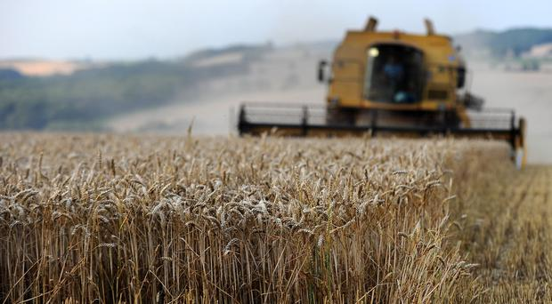 A wheat field, as experts warn agriculture is facing its biggest challenge ever due to population growth and climate change
