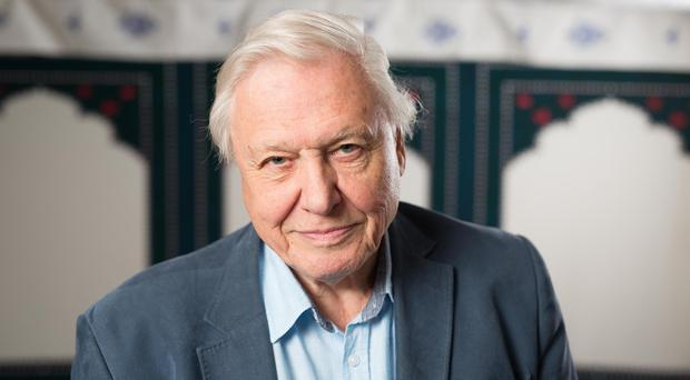 Sir David Attenborough said improvement can only be achieved through 'very, very' hard work