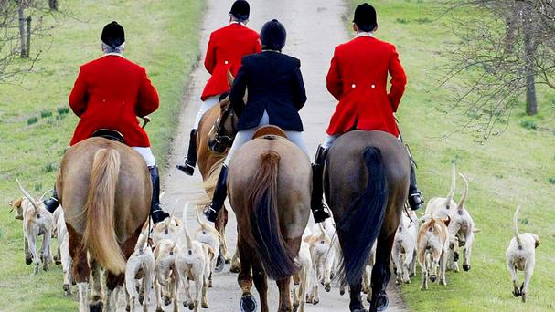 In a 2015 poll 83 per cent of respondents said fox hunting should not be made legal again