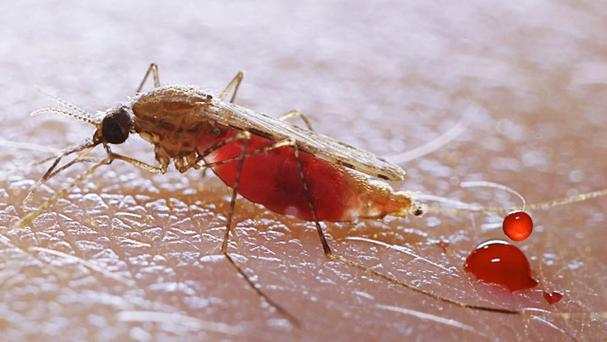 The three travellers picked up the disease through mosquito bites in Colombia, Suriname and Guyana
