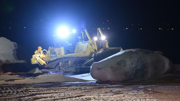 Work begins to remove of one of the sperm whales at Skegness