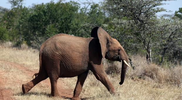 The pilot was trying to help authorities combat the threat of elephant poaching