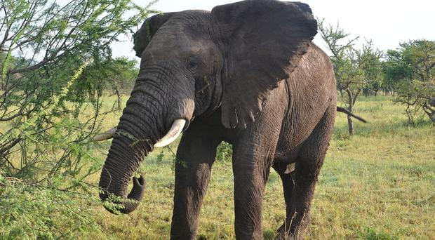 Roger Gower was helping authorities in Tanzania track elephant poachers when they fired on his aircraft, the Friedkin Conservation Fund (FCF) said