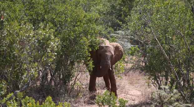 Some wildlife groups claim elephants should not be ridden