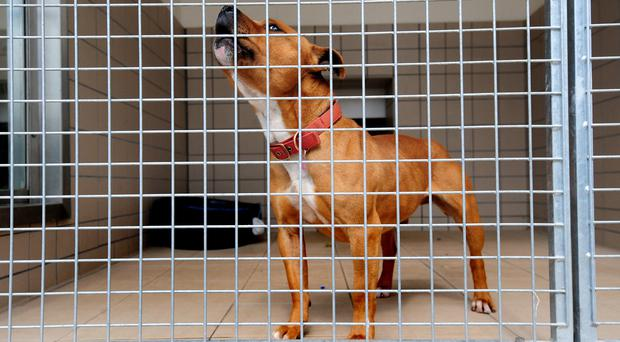 The owner or person in charge of a dangerously out of control dog where a victim dies faces between six and 14 years in prison if they are deemed to have