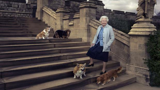 Queen Elizabeth II is seen walking in the private grounds of Windsor Castle on steps at the rear of the East Terrace and East Garden with four of her dogs: clockwise from top left Willow (corgi), Vulcan (dorgie), Candy (dorgie) and Holly (corgi).