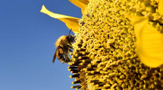 Farmers were told they could not use pesticides banned over concerns they harm bees