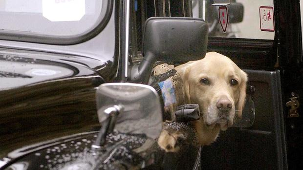 Guide dogs must be allowed in taxis and minicabs by law