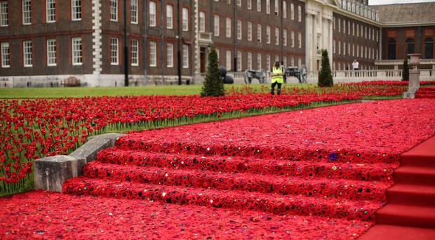 The poppies exhibit at the Chelsea Flower Show