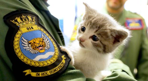 Tigger the kitten that survived a 300-mile journey hiding inside the bumper of helicopter pilot Lt Nick Grimmer's car (Ministry of Defence handout photo)