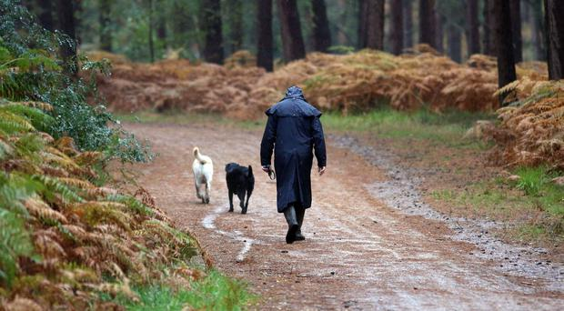 The problem of dog fouling is most acute in areas like parks or other places where people gather for recreation