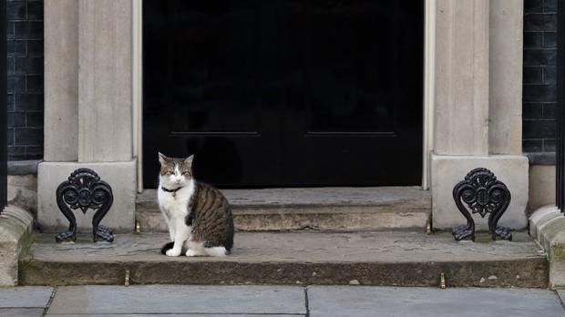 Larry the Downing Street cat on the steps of 10 Downing Street, London