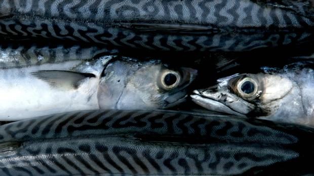 Oily fish may help cut risk of bowel cancer