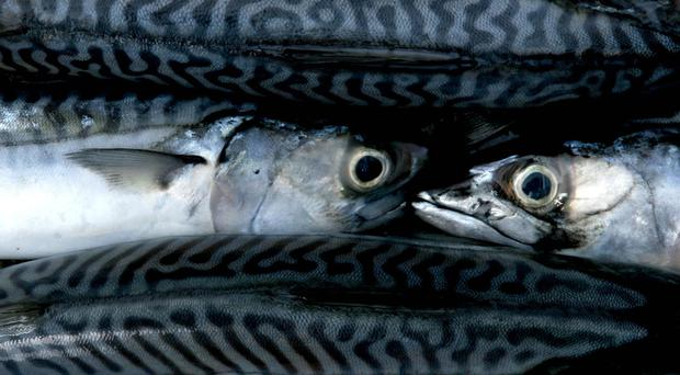 Eating oily fish - such as mackerel - has been linked to a reduction in the risk of dying from bowel cancer
