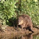 "The report calls for ""rewilding"" and the reintroduction of extinct native species such as beavers and lynxes"