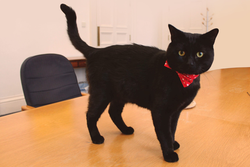Gladstone, the new cat roaming Whitehall, is named after former prime minister and chancellor William Ewart Gladstone