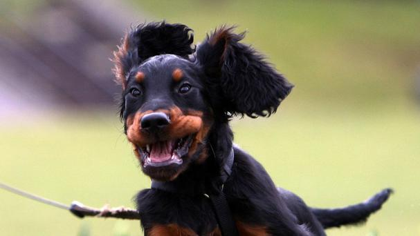 Dogs face the highest risk of ticks in the South West, East Anglia and Scotland