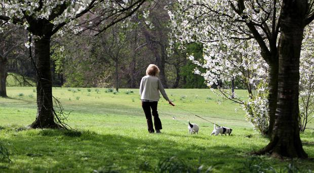 Green exercise is defined as activities such as dog walking in natural spaces