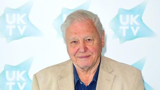 The vessel is to be named after Sir David Attenborough, who will help start work on it