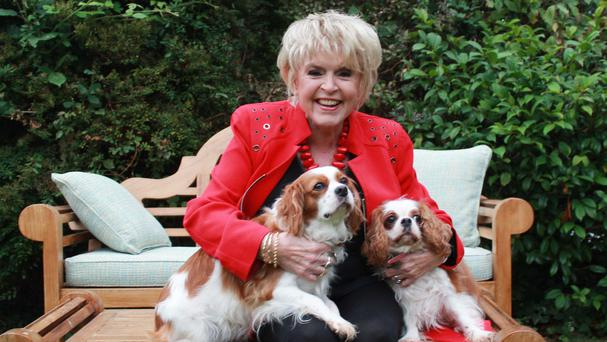 Gloria Hunniford and her two King Charles spaniels, one of many small breeds prone to mitral valve disease