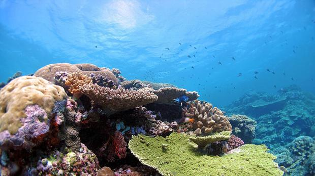 A British diver has died during an expedition on the Great Barrier Reef (PA/Australian Institute of Marine Science)