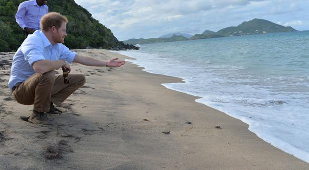Prince Harry releases baby turtles into the sea on Lover's Beach on the island of Nevis