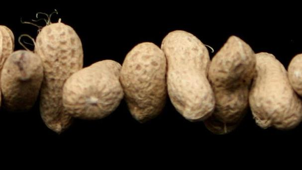 Nuts and peanuts are high in fibre, magnesium, and polyunsaturated fats
