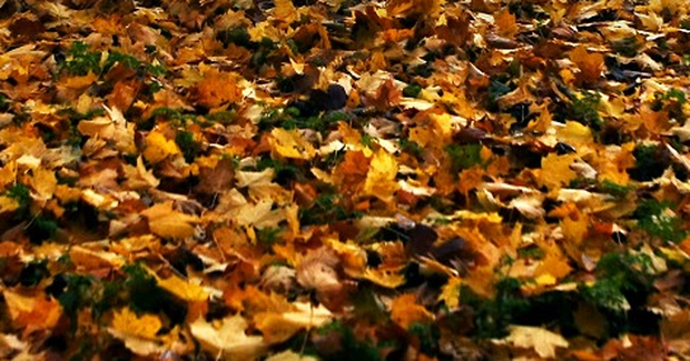 Autumn in Armagh was the driest since the exceptionally dry season of 2007, weather experts at the city's observatory have said