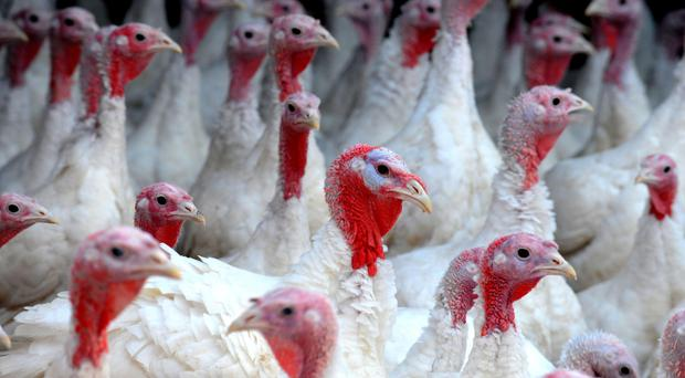 Birds on the farm in Louth, Lincolnshire, which have not already died will be culled in order to prevent the spread of the H5N8 strain, a type of highly pathogenic avian flu, Defra said