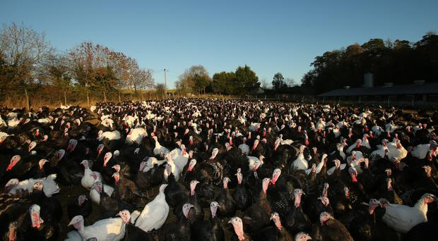 A temporary ban on events involving gatherings of poultry including turkeys is currently in place