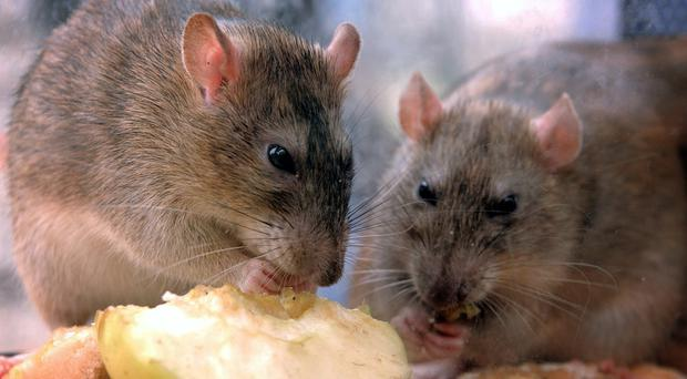 Areas where pests such as rats were sighted included maternity wards, children's intensive care units and operating theatres