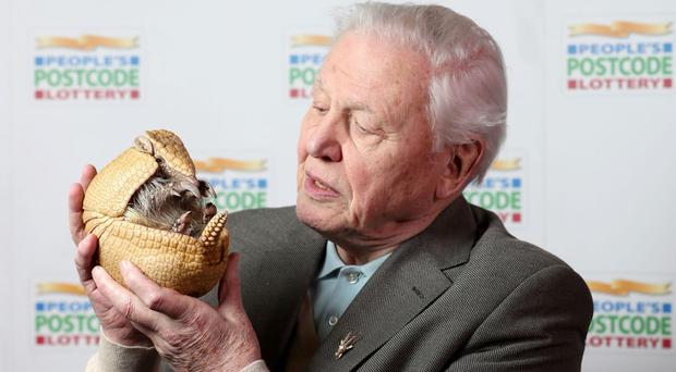 Sir David Attenborough holds an armadillo before receiving a £250,000 cheque from the People's Postcode Lottery for the charity Fauna & Flora International