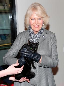 Camilla, Duchess Of Cornwall, with Luna the cat during her visit to the Battersea shelter in Berkshire yesterday