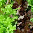 Some supermarkets are rationing the number of lettuces that customers can buy