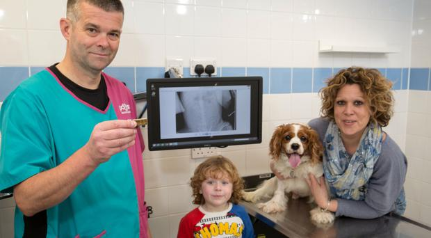 Vet David Jones and owners Lesley Mellor and Cameron Mellor with Cyril. (PDSA/PA)