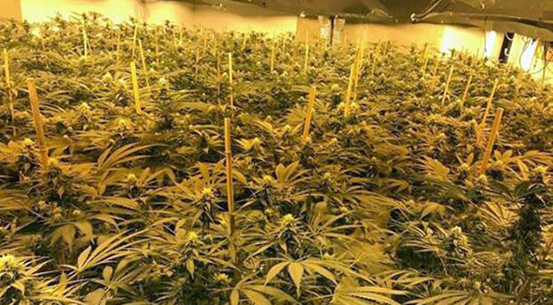 Cannabis plants found following a raid on Chilmark nuclear bunker (Wiltshire Police/PA)