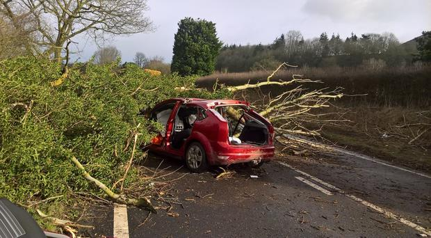 The car the man was travelling in was hit by a tree