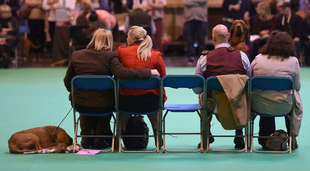 Dogs relax as their owners watch the judging during day three of Crufts 2017