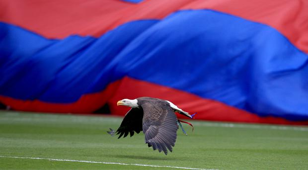 Kayla the Eagle, Crystal Palace's mascot