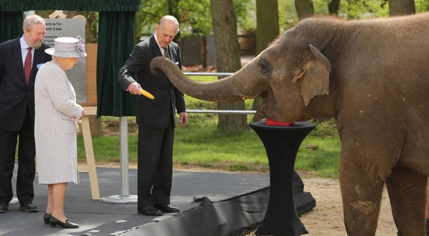 The Queen and Duke of Edinburgh feed an elephant at ZSL Whipsnade Zoo