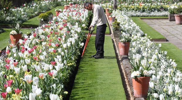A Historic Royal Palaces gardener carrying out edging in the White Garden at Kensington Palace, created to celebrate the life of Diana, Princess of Wales