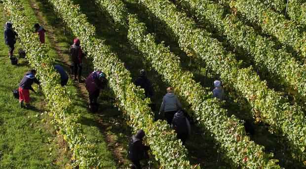 Wine producers are benefiting from the growing popularity of boutique British alcohol production (Andrew Matthews/PA)